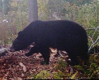 bear2014-2_NEW-e1553823087100